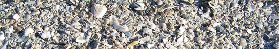 Research Support - Bull Island - Seashells - Maynooth University