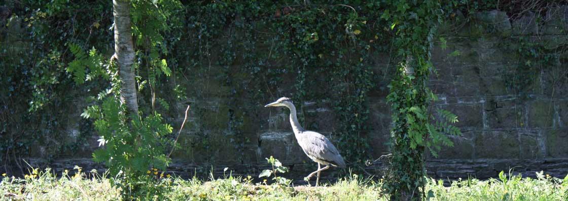 Micheal Bolger - Bird in garden - Maynooth University