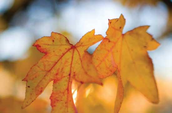Default Profile Photo - Autumn Leaves
