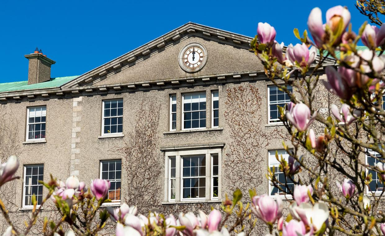 A magnolia tree in blossom in front of a building in St Joseph's Square