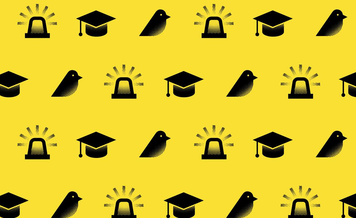 Light icon, bird icon and mortarboard icon on a yellow background
