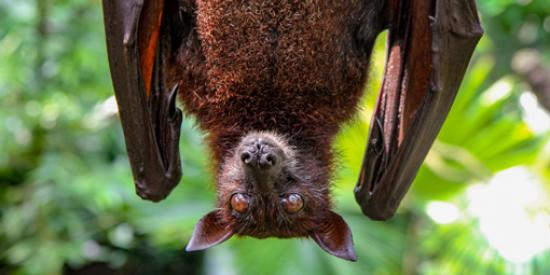 Talk Encountering Maynooth's Bats
