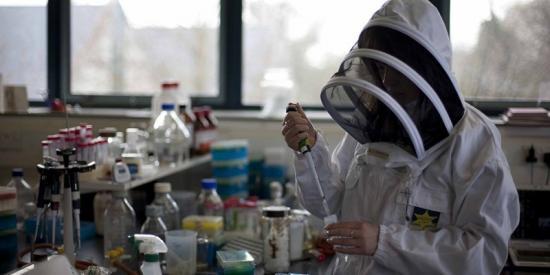 Biology - Beemune - Maynooth University